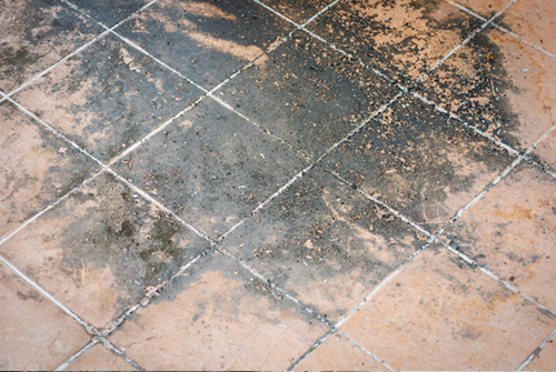 mold in flooring